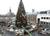 بعد1500 ساعة عمل... ولدت أكبر شجرة عيد ميلاد في العالم!