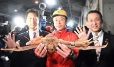 سلطعون بحري بـ 46 ألف دولار في اليابان
