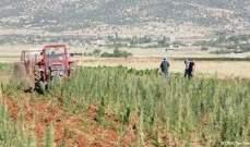 مزارعي البقاع يطالبون المصارف بتوفير اعتمادات مالية بالدولار لشراء بذور البطاطا