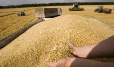 رومانيا وبلغاريا تستعدان لحصاد محصول قمح جيد