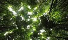 البرازيل: سنحدّ من إزالة الغابات إذا حصلنا على مساعدات بقيمة مليار دولار