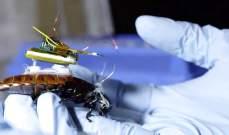 اليابان تحول صراصير الى روبوتات