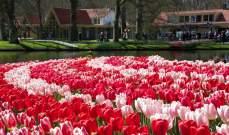 """صادرات الزهور الهولندية تنهار بسبب أزمة """"كورونا"""""""