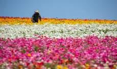 تركيا.. تصدير زهور بنحو 7 ملايين دولار