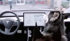 """إيجاد خلل في وضع """"dog mode"""" في سيارات """"تسلا"""""""