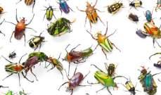 الجيش الأميركي يسعى لتطوير أدمغة روبوتية مستمدة من ذكاء الحشرات