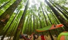 سياحة الغابات في الصين ترتفع 13% إلى 1.2 مليارمن كانون الثانيحتى آب 2019