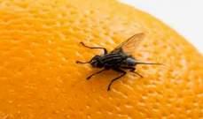 """علماء يصممون أدق خارطة لدماغ ذبابةبالتعاون مع """"غوغل"""""""