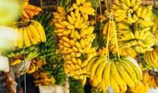 تغير المناخ يسبب انخفاضاً كبيراً في إنتاج الموز بحلول عام 2050