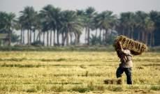 العراق يملك 5 ملايين طن احتياطات استراتيجية من القمح تكفي عاماً