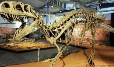 عظام لديناصور صغير عمره 68 مليون سنة للبيع بـ2.95 مليون دولار!