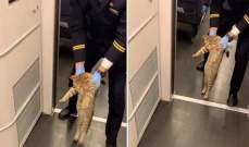 """بالفيديو.. قطار صيني يطرد قطة """"بدون تذكرة""""!"""