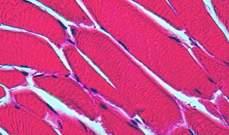 علماء يطورون جهاز ثلاثي الأبعاد لمحاكاة الأنسجة داخل جسم الإنسان