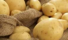 صادرات مصر من البطاطا ترتفع بنسبة 7.9% في آذار الماضي