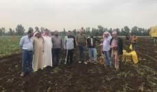 الحايك: كارثة كبيرة تواجه المزارعين بسبب تهريب البطاطا السورية الى السوق