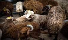 أسعار اللحوم تقفز 20% بمصر مع اقتراب عيد الأضحى