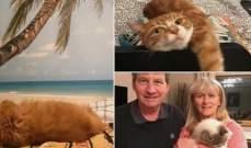 """فندق يقدم المساعدة المجانية لأصحاب القطط المصابين بـ """"كورونا"""""""