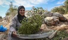 17.5 مليون دولار منحة اوروبية لدعم التنمية الزراعية في فلسطين