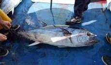 """يصطادون سمكة """"تونا"""" قيمتها 3 مليون دولار.. ويلقون بها في البحر"""