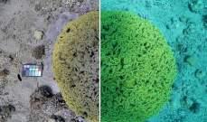عالمة تبتكر خوارزمية لإزالة المياه من الصور الملتقطة تحت البحار