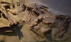 2.3 مليون دولار قيمة هيكل ديناصور من سلالة جديدة