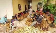 مزارعو التبغ والتنباك في عكار: للاستمرار في دعم القطاع