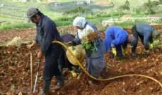نقابة مزارعي الجنوب تدعو لتفعيل برنامج دعم المدخلات الزراعية
