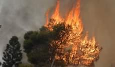 """مجموعة """"ABC"""" تتبرع بـ 100 مليون ليرة لإعادة تشجير الغابات التي دمرتها الحرائق"""