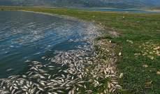 """لليوم العاشر.. """"مصلحة الليطاني"""" تتابع حملة رفع الأسماك النافقة من بحيرة القرعون"""