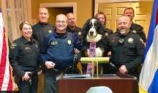 أول كلب في منصب العمدة الفخري لمدينة أميركية!