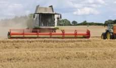 العراق يحصد 500 ألف طن من القمح المحلي منذ بداية الموسم