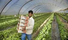 المزارعون اليونانيون: دون العمّال الأجانب لن نحظى بدرّاقة واحدة