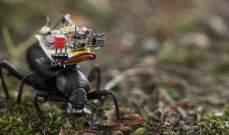 تطوير حقيبة ظهر روبوتية تركب على الخنافس وتتبع رؤيتها