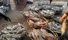 7.4 مليون درهم مبيعات الأسماك في أبوظبي العام الماضي