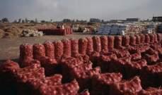 السعودية تحظر استيراد البصل المصري