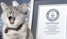 """""""نالا""""القطّة الأكثر شعبية على""""إنستغرام"""" تحقق لمالكيهاأرباحا كبيرة"""