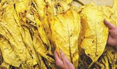 رئيس نقابة مزارعي التبغ في الشمال طالب مصارف عكار بدفع ثمن المحصول دفعة واحدة للمزارع