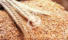 الجزائر تطرح مناقصة لشراء القمح اللين