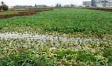اللقاء الوطني للهيئات الزراعية في لبنان: لإعطاء الحكومة فرصة