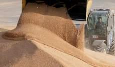 مصر تشتري 120 ألف طن من القمح الروسي والروماني