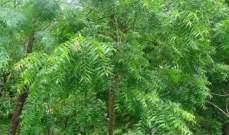 تطوير وقود حيوي جديد مستخلص من أشجار النيم