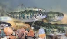 إنخفاض صادرات النرويج من سمك السلمون إلى الصين