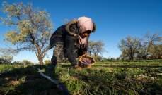 المغرب يطلق خطة زراعية لخلق 350 ألف وظيفة في الأرياف