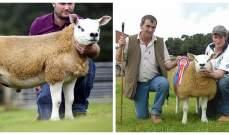 مع الاقتراب من عيد الأضحى... تعرف الى سعر أغلى خروف!