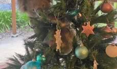 اشترت شجرة عيد الميلاد... وما وجدته داخلها كان صادما!