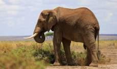 دراسة: تجارة الحيوانات البرية عبر الإنترنت تشهد رواجا كبيرا