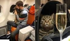 خدع الجميع وسافر مع قطه الممنوع من صعود الطائرة... والطريقة عبقرية!