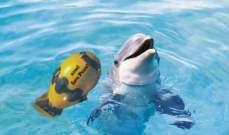 مكافأة تفوق 11 ألف دولار لمن يجد قاتل أنثى دلفين حامل