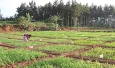 الاتحاد الأوروبي يفرض رسوما على واردات الأرز من كمبوديا وميانمار