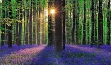 8 وجهات من حول العالم لمحبي السياحة في الغابات